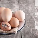 eggbannernew